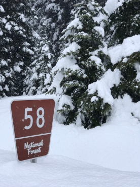 The top of the sign competes with foot traffic along the #1036 Trail.