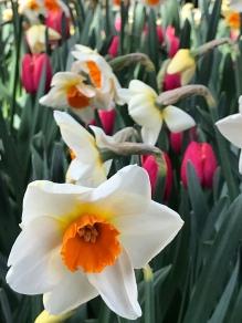 Together in bloom...
