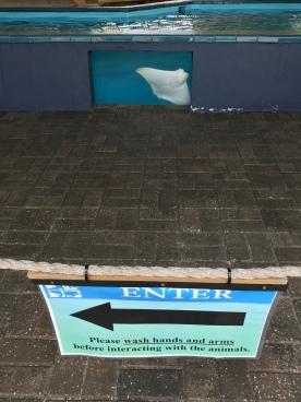 Rays on the Reef exhibit
