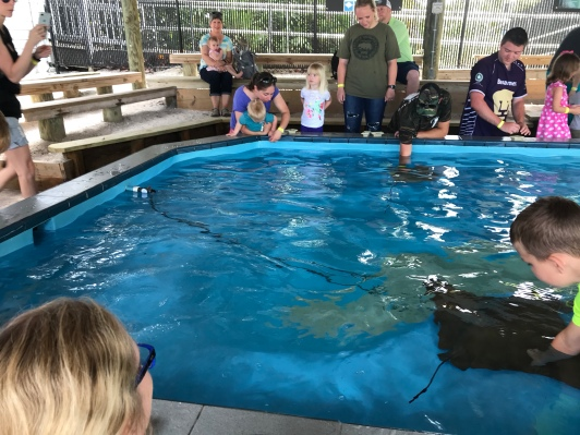 Visitors awaiting the rays' feeding program