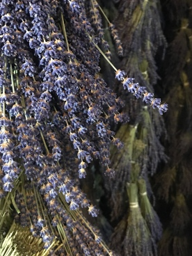 Drying harvested lavender