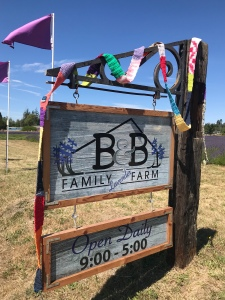 The Ugly Scarf visits B&B Family Lavender Farm