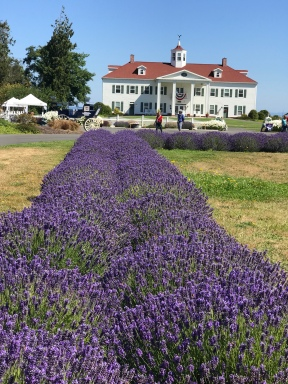 The Washington Lavender Farm...