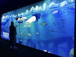 Interactive Polar Journey