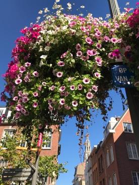 Beautiful floral hanging baskets!