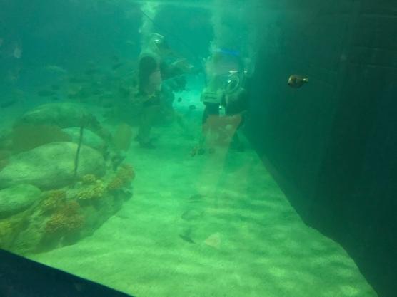 Under the sea…