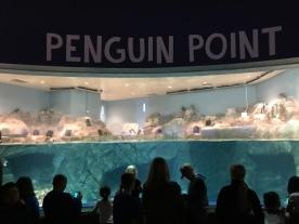 Watching penguins watching people