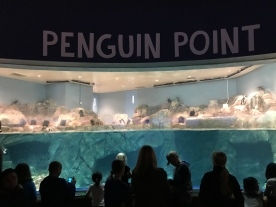 Watching penguins watching people